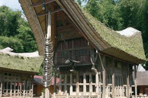 Faszinierendes Sulawesi
