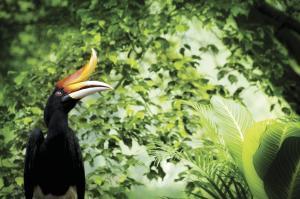 Unterwegs im Regenwald Borneos