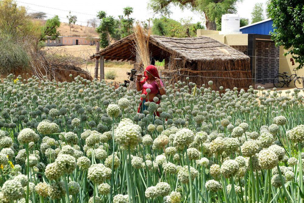Indien   Rajasthan - Zauberhaftes Taj Mahal und das Land der Maharadschas