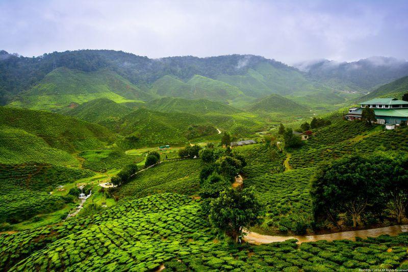 Entspanntes Ankommen zwischen Teeplantagen