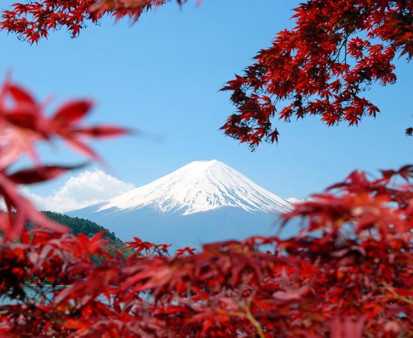 Fuji-san umrahmt von japanischem Herbstlaub