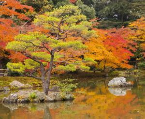 Japan - Komfort auf Japanisch