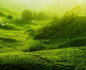 Malaysia - Unbekanntes Asien entdecken