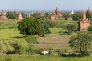 Myanmar  -  Pagoden, Mönche und Meer