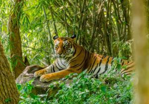 Rundreise - Erlebnisreise Indien