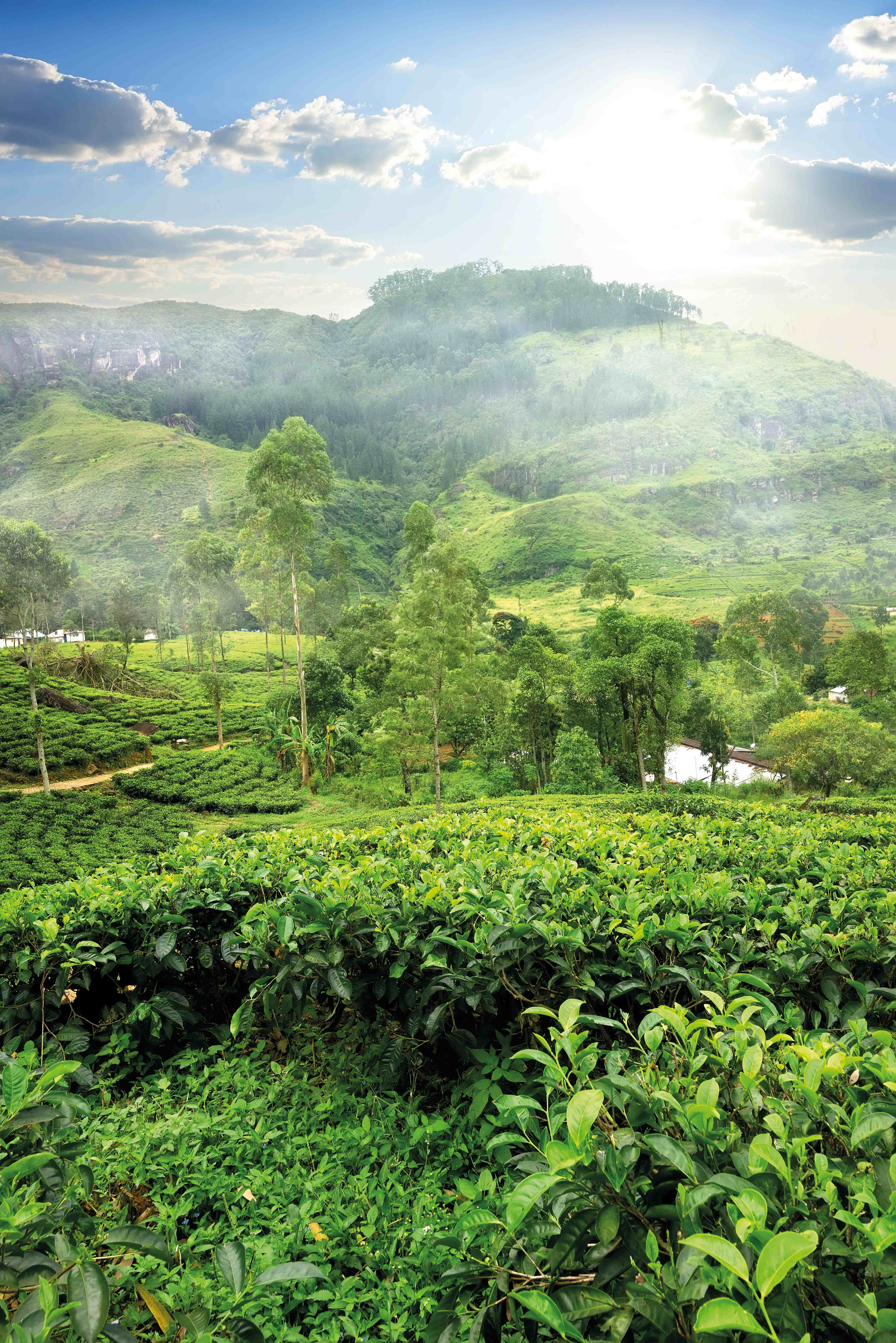 Sri Lanka: Die ausführliche Reise