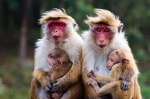 Sri Lanka: Im Einklang mit der Natur