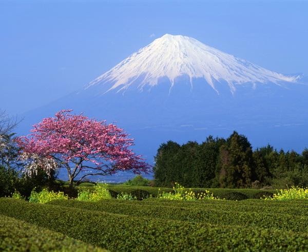 Der Berg Fuji zur japanischen Pflaumenbl?te