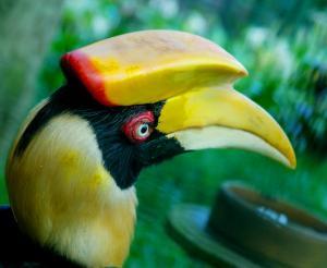 Sulawesi - Im Reich der Nashornvögel
