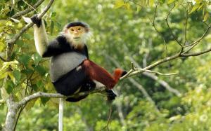 Vietnam - Streifzug durch die letzten Naturparadiese