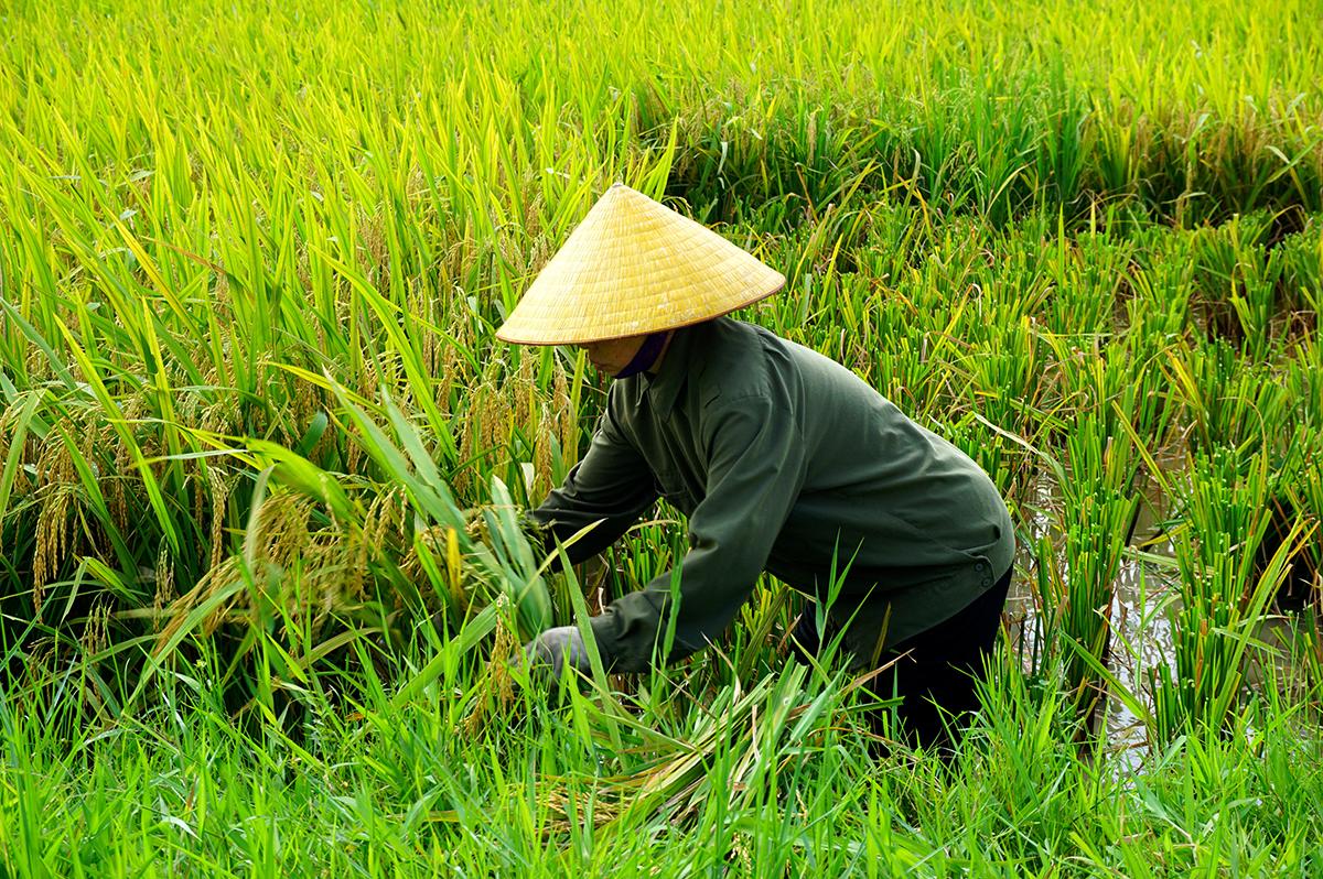 Vietnam  -  Mittendrin statt nur dabei