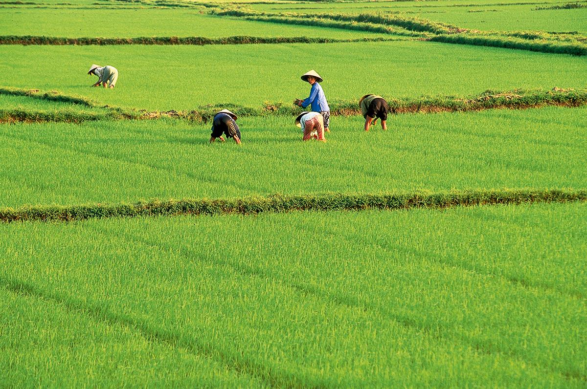 Vietnam kennenlernen